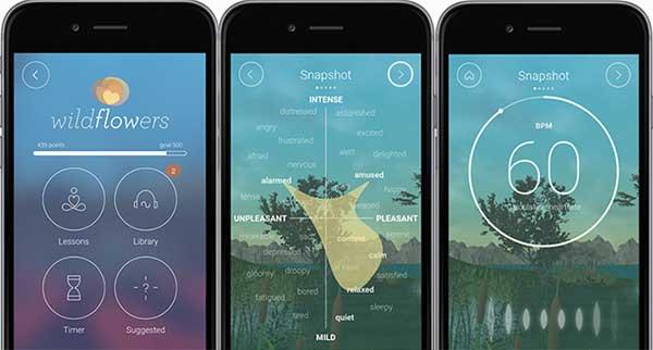 Wildflowers Mindfulness App